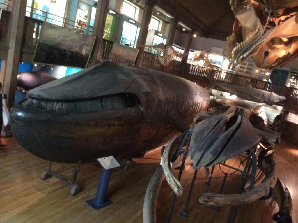 The malmo whale