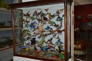 booth museum birds